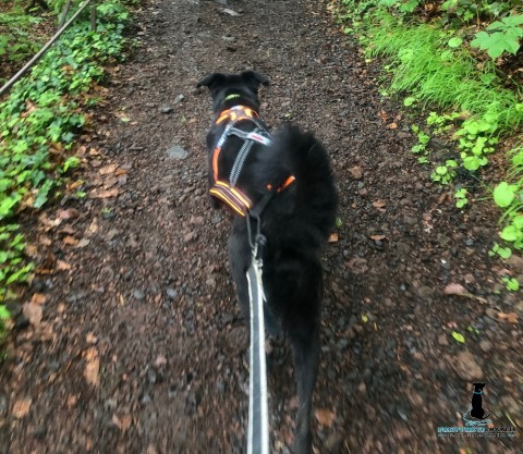 Ich werde dann mal fit – Lauftraining mit Hund (Werbung)
