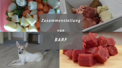 Zusammenstellung von Barf – Was muss in den Futternapf?
