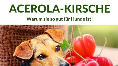 Immunbooster Acerola-Kirsche