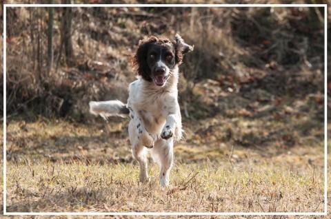 Jagdhunde – Antijagdtraining