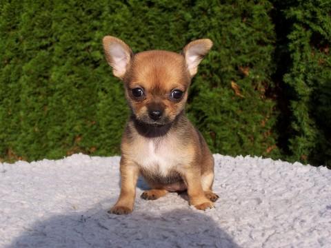 Hundekauf – worauf sollte man achten?