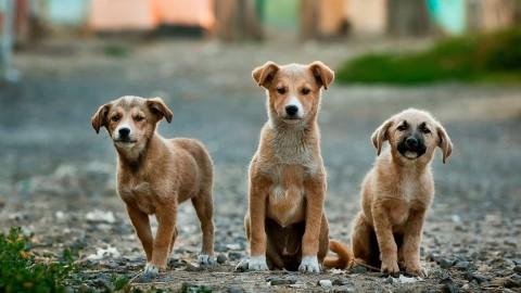 Straßenhunde in Portugal – vierbeiniger Nachwuchs für uns?