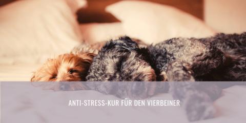 Anti-Stress-Kur für den Vierbeiner