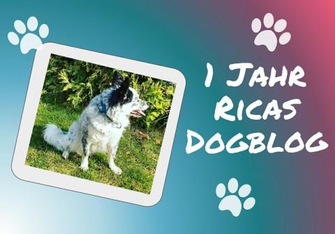 Hurra! – Ricas Dogblog wird ein Jahr