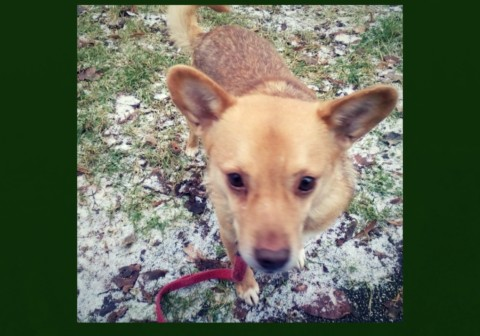 Ein Hund aus dem Ausland: Das solltest du wissen