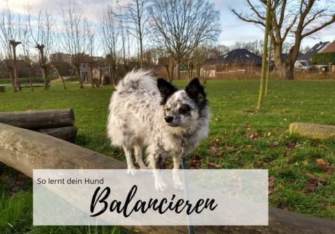 So lernt dein Hund zu balancieren