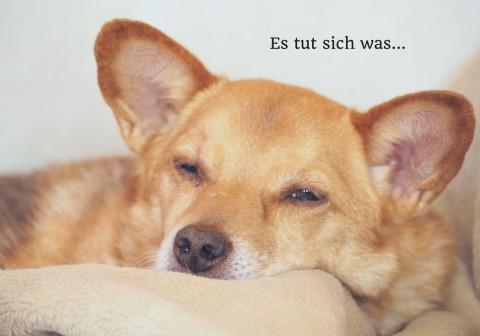 """Ein neuer Lebensabschnitt – und """"Schuld"""" ist der Hund"""