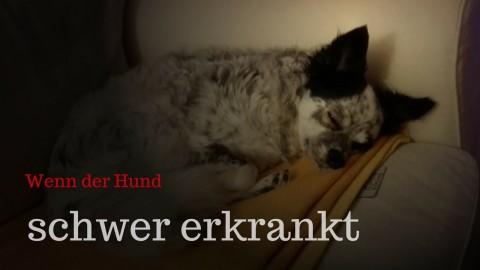 Wenn dein Hund schwer erkrankt – So wirst du leichter damit fertig