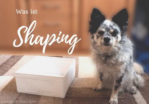 Shaping – neues Verhalten Schritt für Schritt