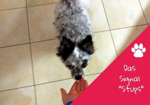 """Wertvolle Hilfe im Alltag: Das Signal """"Stups"""""""