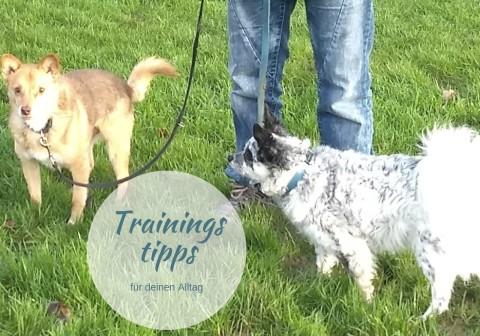 5 Tipps, die dir das Training mit deinem Hund erleichtern