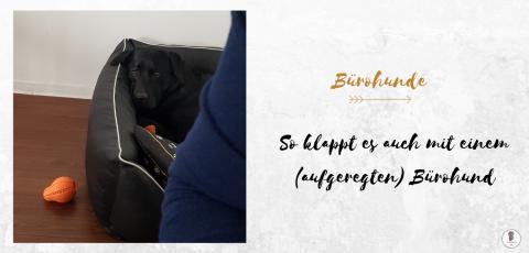 So klappt es mit einem (aufgeregten) Bürohund