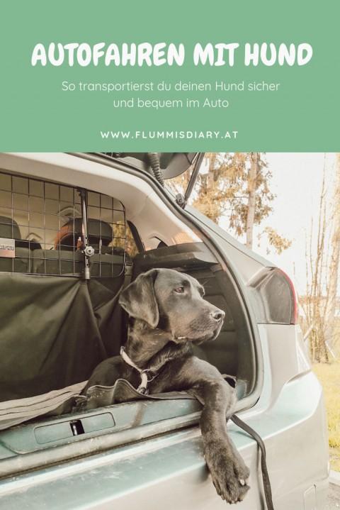 Autofahren mit Hund – die besten Methoden und Tipps