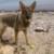 Profilbild von Meeko