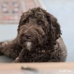 Profilbild von Baloo