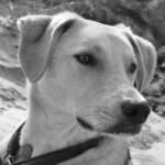 Profile picture of Finn