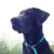 Profilbild von Oscar
