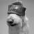 Profilbild von Elmo