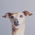 Profilbild von miDoggy Community