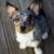 Profilbild von Motte - die Killerkrokette