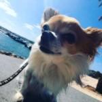 Profilbild von Emilio
