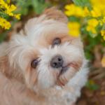 Profilbild von Toffee