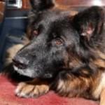 Profilbild von Cora