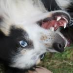 Profilbild von Django - Ein griechischer Hund an der Ostsee