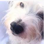 Profilbild von Maia