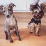 Profilbild von Charmin&Minnie