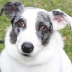 Profilbild von Zeus