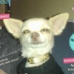 Profilbild von Graf Koks