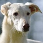 Profilbild von Alba