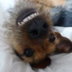 Profilbild von Curly Wurly