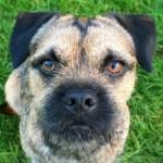 Profilbild von Baxter