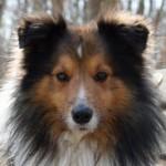 Profilbild von Flauschefell_Elvis
