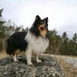 Profilbild von Pika