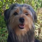 Profilbild von Merlin