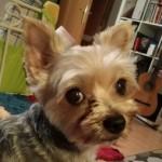 Profilbild von Daisy