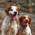 Profilbild von Deco & Pippa