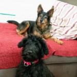 Profilbild von Lucy und Willi