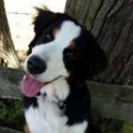 Profilbild von Bella