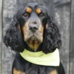 Profilbild von Charly