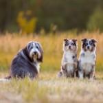 Profilbild von Emmely, Hazel und Colani