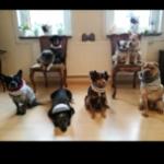 Profilbild von Die etwas andere Hundegang