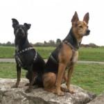 Profilbild von Rombo und Kim