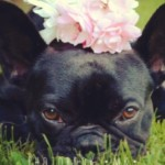 Profilbild von Emma the Frenchi