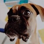 Profilbild von Bruno