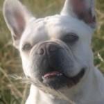 Profilbild von Wilma