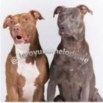 Profilbild von Leroy und Melody